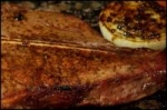 Cowboy Steaks With Onions picture