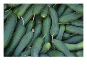 picnic zucchini bean salad picture