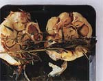 roasted-garlic herb dip picture
